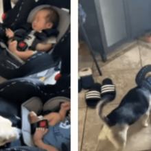 Cachorro conhece os bebês de seu dono e sua reação emociona a todos