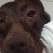 Cachorro que nunca tinha recebido um banho, agora é tratado como um Rei