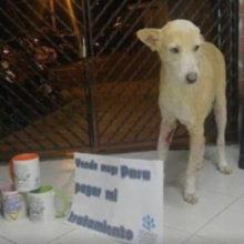 Cabo, o cachorro que vende xícaras para pagar pelo tratamento contra o câncer