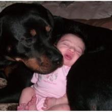 Cão da Raça Rottweiler Passa Noite Cuidando de Bebê que Foi Abandonado