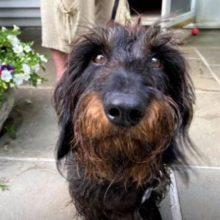 Com Olhos Lacrimejando, Cachorro Agradece aos Bombeiros Por Salvar sua Vida