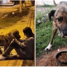 Ele estava com frio e com fome nas ruas depois de ser abandonado devido a pandemia até que alguém o viu