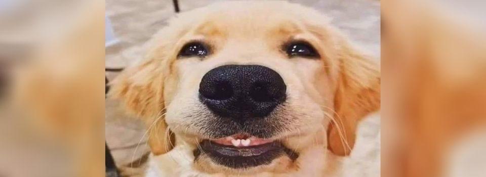 Filhote de Cachorro com Dentes em Forma de Coração Encanta o Mundo