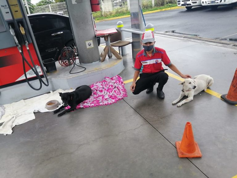 Funcionários de posto de gasolina abrigam cães de rua e lhe dão cobertores