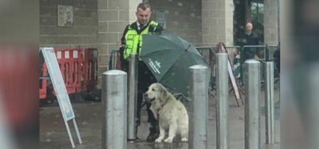 Guarda Protege Cachorro de Tempestade Com Seu Guarda-chuva Sem se Importar em Se Molhar
