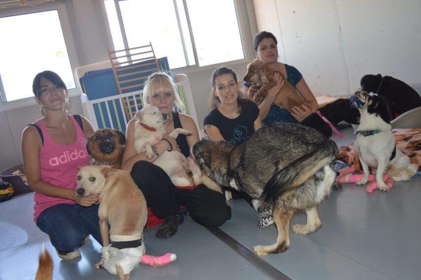 Milionário Salva Abrigo que Cuida de Cães Deficientes