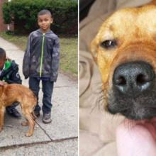 Quatro Heróis Resgatam um Cachorro Amarrado e não Descansam Até Encontrar um Lar para Ele