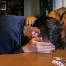 Segundo estudos, os cães sabem quando uma pessoa está triste