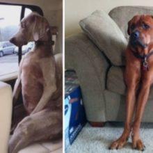 12 Cães que Nunca Aprenderam Como se Sentar Corretamente
