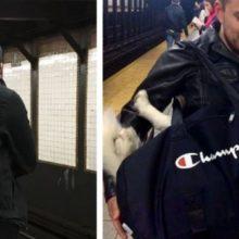 A Regra era: Proibido Cães no Metrô, a Menos que caibam em Bolsas
