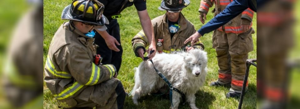 Bombeiros Resgatam Mulher Que Ficou Presa em Bueiro Quando Tentava Salvar seu Cachorro