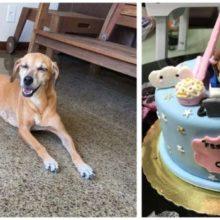 Cachorro Ligeiro Rouba bolo de sua Dona Sem Saber que Estava Sendo Vigiado