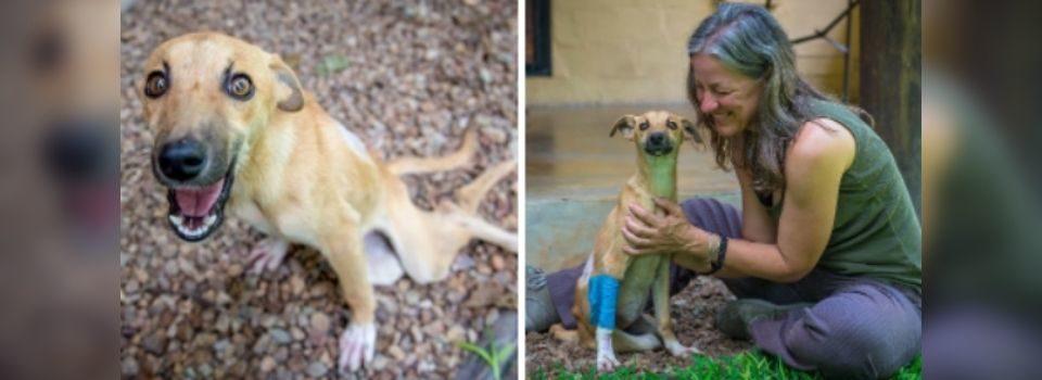 Cachorro Paralisado Rasteja por Quilômetros até Conseguir Ajuda e ser Adotado