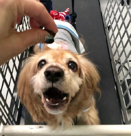 Cão com Lesão Medular é Resgatado e Encontra a Melhor Mãe do Mundo