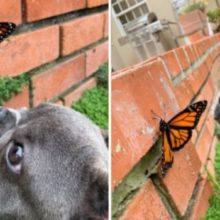 Cão Curioso faz Amizade com uma Borboleta e suas Fotos são as Mais Lindas
