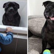Cão Foge de Casa Todos os Dias para Tomar Banho com as Crianças do Vizinho