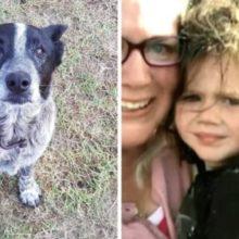 Cão Surdo e Quase Cego Ajuda Família a Localizar e Salvar Bebê que Estava Desaparecido