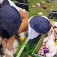 Dono de cão se despede de seu filho em um momento de partir o coração