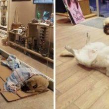 Dono de Loja Abre suas Portas Para Cães Sem Teto se Protegerem do Tempo Frio
