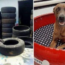 Ele Transforma Pneus Velhos em Camas Confortáveis Para Cães e Gatos de Rua