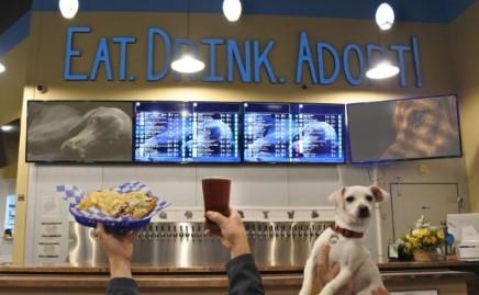 Beba cerveja a adote um cachorro