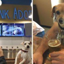 Fido's a Casa de Cerveja Onde Você Bebi e Conhece Cães Disponíveis Para Adoção