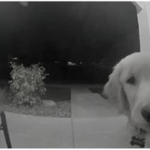 Filhote de Cachorro Escapa de Casa, se Arrepende, Volta e Toca Campainha