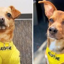 Hotel Abriga Cães Abandonados e Incentiva Hóspedes a Adotá-los Durante Estadia