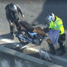 Motoristas Param Avenida Super Movimentada Para Resgatar Cachorro Assustado