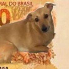Movimento Implora Para que o Cachorro Caramelo Estampe as Novas Notas de 200 Reais