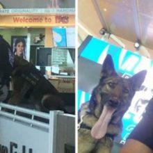 Mulher Flagra Policial Tirando Selfies Escondidas com Cachorro e o Resultado é Mágico