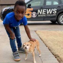 Pequeno Chihuahua Resgatado Ajuda Criança Adotada a Superar o Medo de Cães