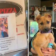 Pizzaria faz Campanha de Adoção de Cães Colocando sua Fotos em Caixas de Pizzas