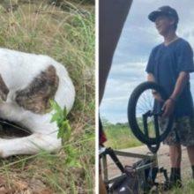 Três Adolescentes Encontram Cachorro Ferido na Beira da Estrada e Salvam sua Vida