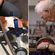 Ele tem 92 Anos é Aposentado e Dedica sua Vida a Fazer Cadeiras de Rodas Para Cães Deficientes