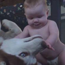 Bebê Rasteja para seu Cachorro e o pai Flagra a Reação dos Dois, é Incrível