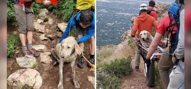 Bombeiros Resgatam Cachorro Desidratado de uma Montanha e Salvam sua Vida