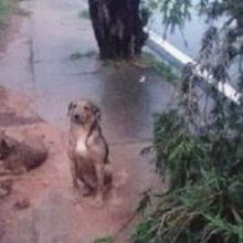 Cachorro Cuida De Amigo Machucado Durante Temporal até Chegar o Resgate