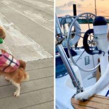 Cachorro Foi Adotado e Passou de Morador de Rua a Uma Vida de Luxo