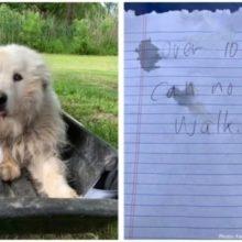 Cachorro Idoso é Deixado do Lado de Fora de Abrigo com uma Carta Comovente