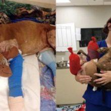 Cachorro que era Forçado a Lutar é Resgatado, Adotado e Recebe seu Primeiro Banho Quente