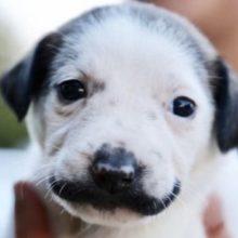 Cachorro Resgatado Ganha Fama por causa de Seu Bigode Engraçado