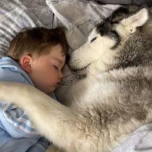 Cachorro se Recusa a Sair da Cama do Bebê para que ela possa Acariciá-lo para Dormir