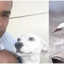 Cão é levado pela correnteza e seu dono arrisca a vida para salvá-lo