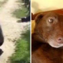 Cão Perdido Anos Atrás não Reconhece seu Dono, Mas Quando Cheira Tudo Muda