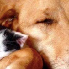Cão Resgatado não Para de Abraçar Cada Gatinho que Sua Família Adotou