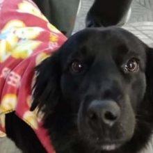 """""""Gratificante"""": Costureira faz Roupas para Cachorros de Morador de Rua"""