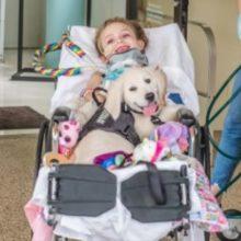 Criança paralisada de 6 anos encontra seu futuro cão de serviço e se liga ao filhote instantaneamente
