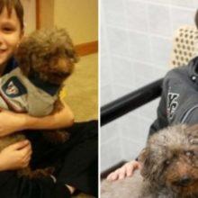 Criança Vai ao Abrigo e Escolhe o Cão Mais Velho Como seu Novo Melhor Amigo