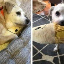 Desde que Este Cachorro de 20 Anos Recebeu esse Brinquedo, ele Nunca mais se Separou Dele